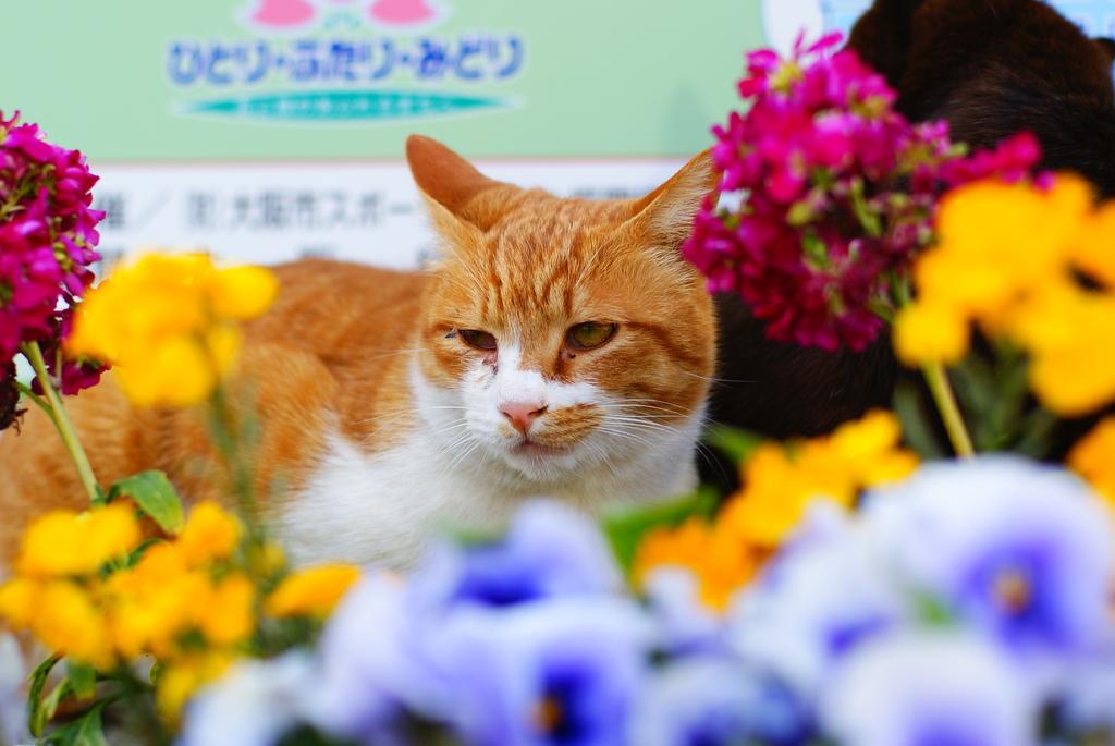 猫ポートレート No.003