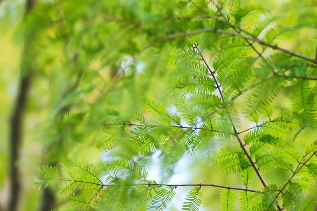 葉のレイヤー