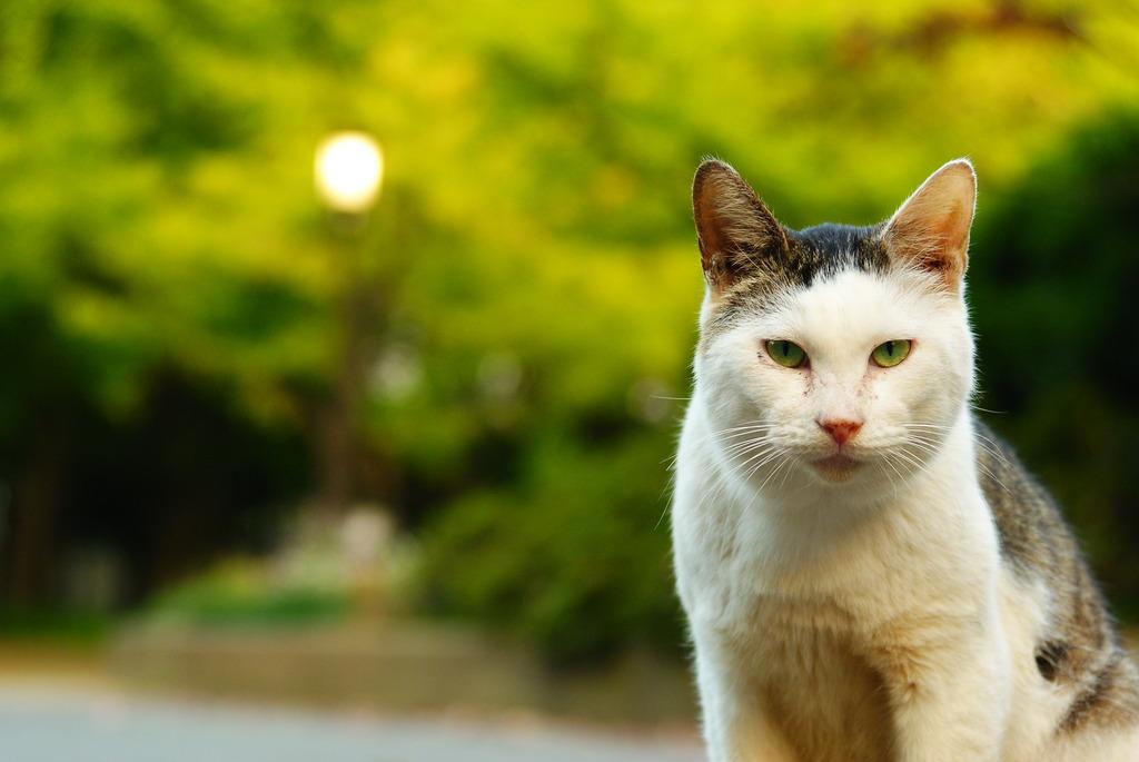 猫ポートレート No.015
