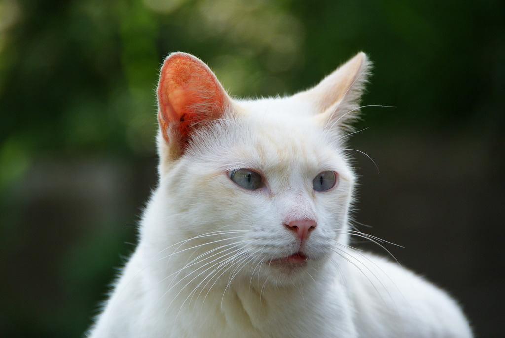 猫ポートレート No.0012