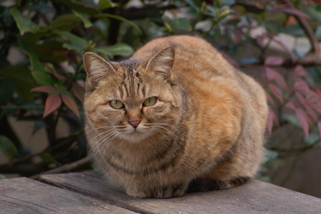 ベンチを護る猫