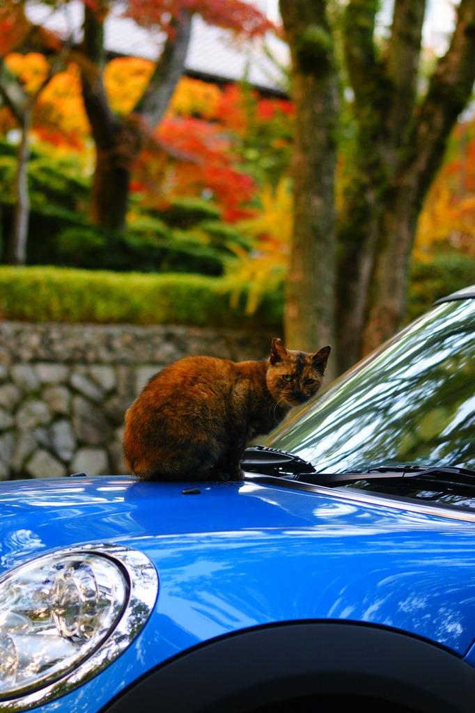 高級車が好きで・・・