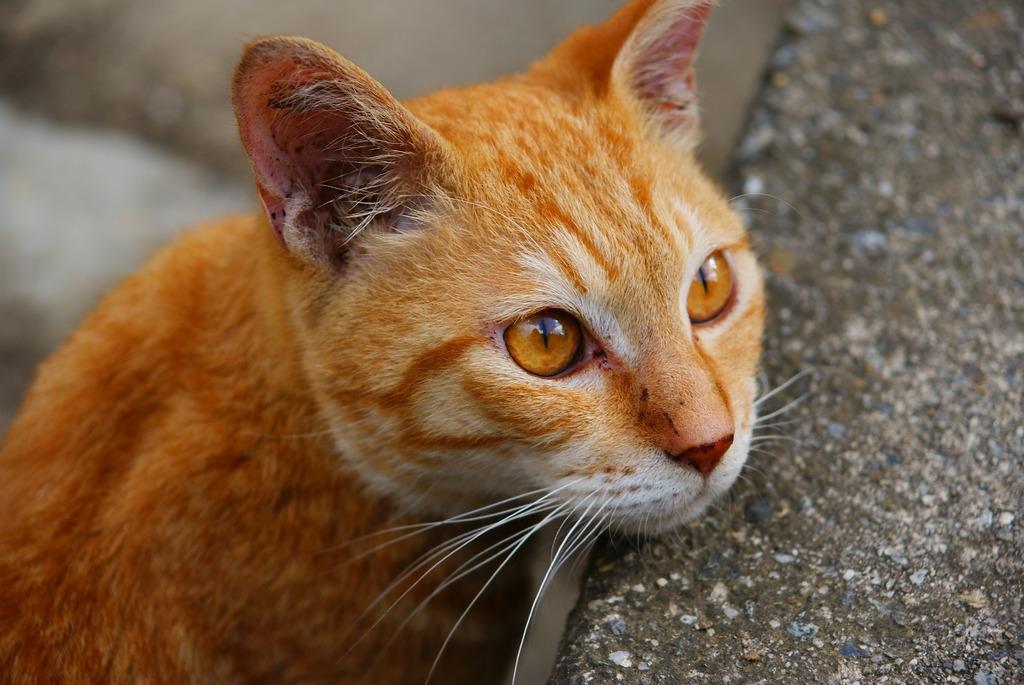 猫ポートレート No.010