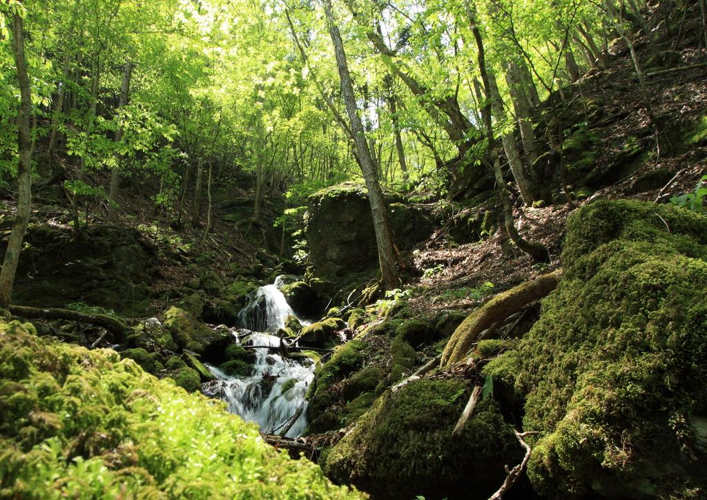 ある渓の源頭部