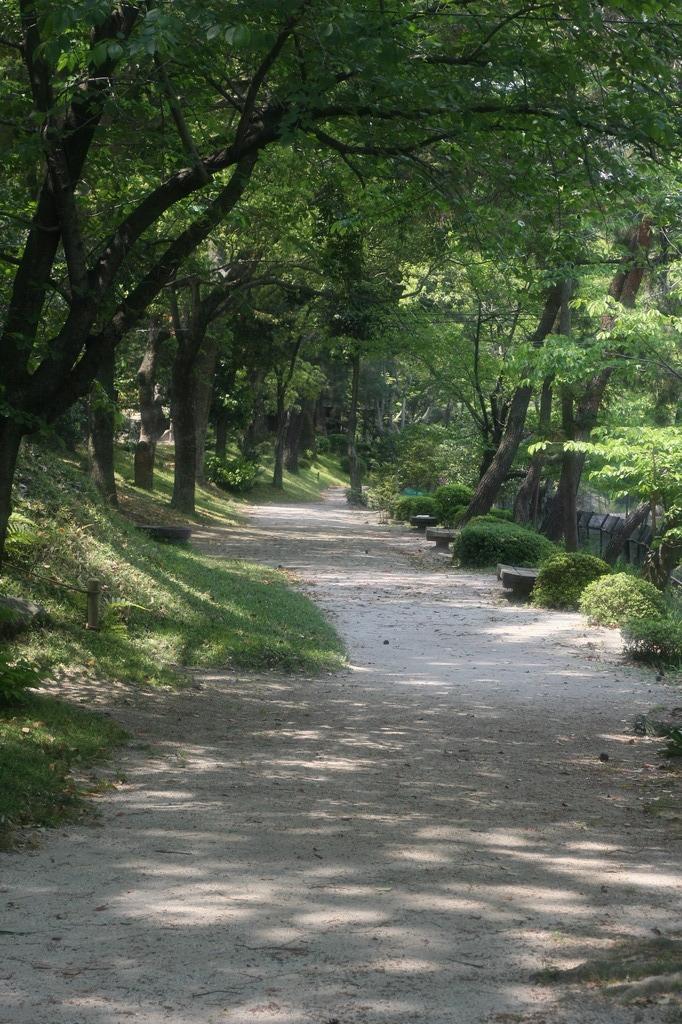 緑へとつづく道