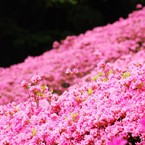 NIKON NIKON D40で撮影した(白野江植物公園)の写真(画像)