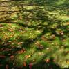 落ち葉と芝と影