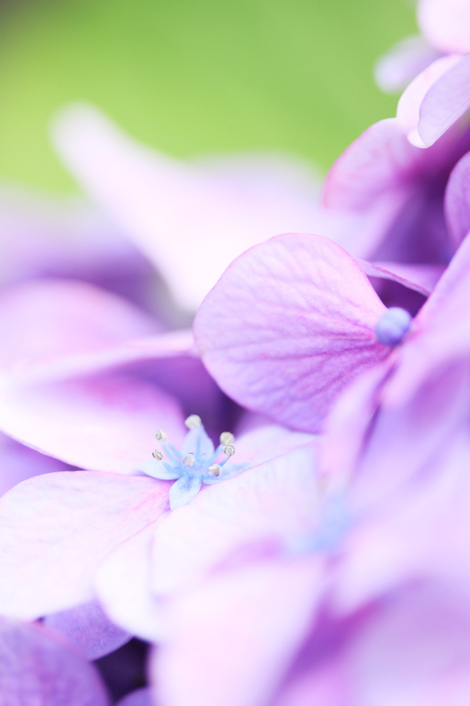 六月の花 その2