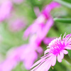 六月の花 その4