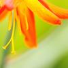 六月の花 その1