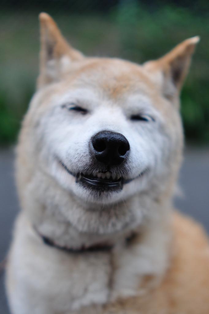 ななちゃん、笑う♪
