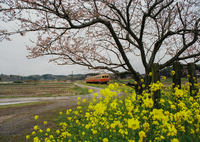 MAMIYA M645 1000Sで撮影した(小湊鉄道)の写真(画像)