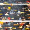 雨の秋色ハナビ