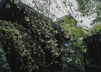 MAMIYA M645 1000Sで撮影した(小倉城にて)の写真(画像)