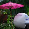 NIKON NIKON D90で撮影したインテリア・オブジェクト(ANA様 雨が.......)の写真(画像)