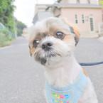 NIKON NIKON D90で撮影した動物(ん~?)の写真(画像)