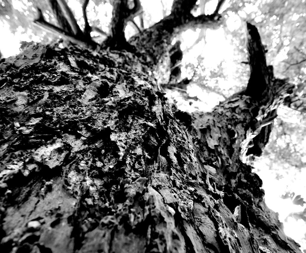 大木の試練