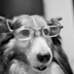NIKON NIKON D90で撮影した動物(老眼鏡のお年頃)の写真(画像)