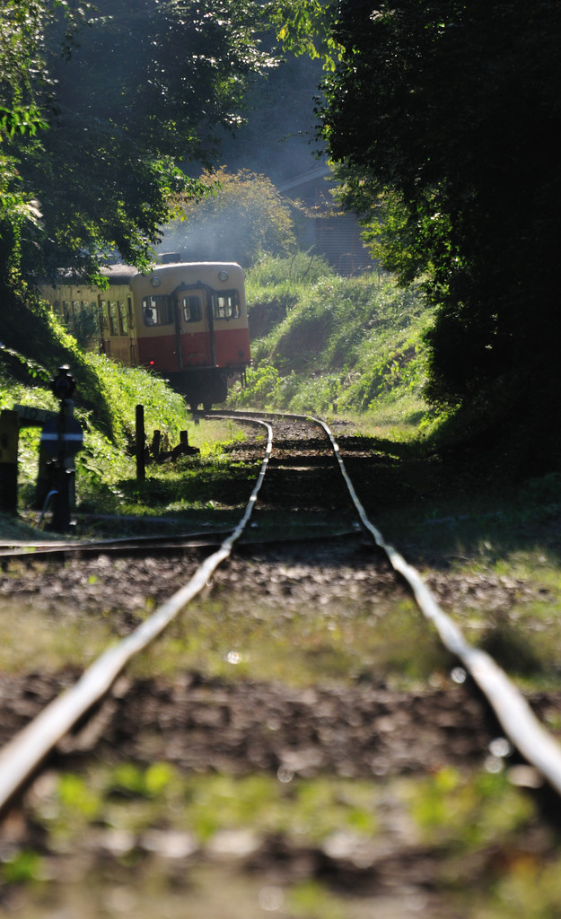 緑のトンネルを抜けて