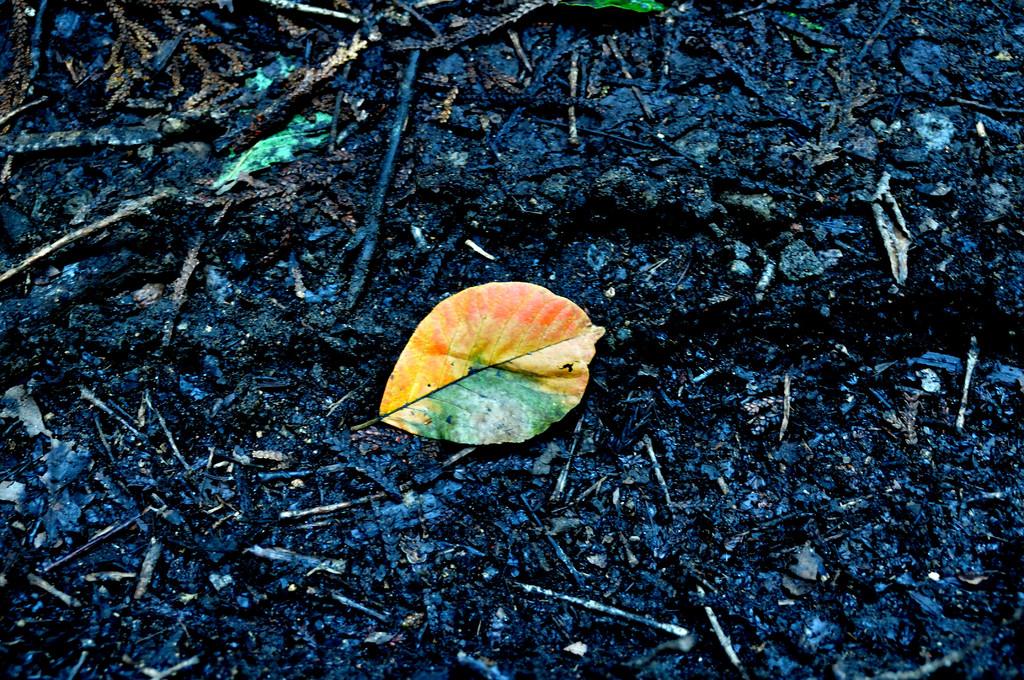 秋のシグナル