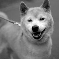 NIKON NIKON D60で撮影した動物(思わずニッコリ)の写真(画像)