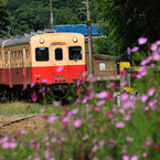 NIKON NIKON D300で撮影した乗り物(秋を行くローカル線)の写真(画像)