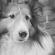 NIKON NIKON D60で撮影した動物(思慮)の写真(画像)