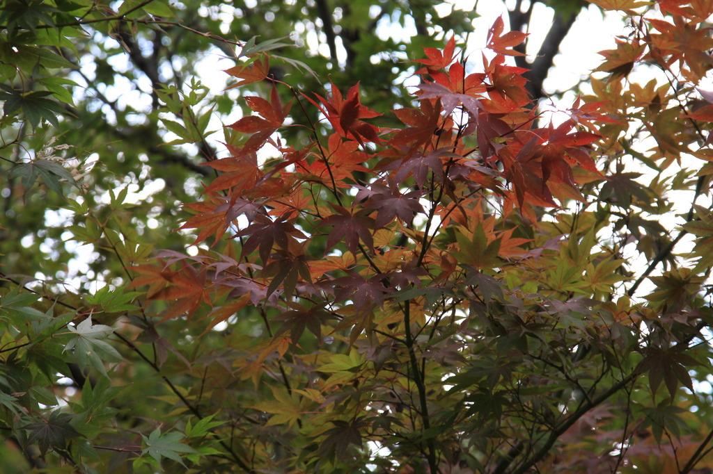 秋も近づいた
