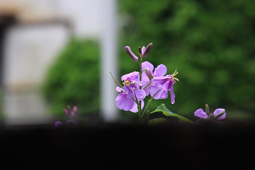 壁の向こうに綺麗な花