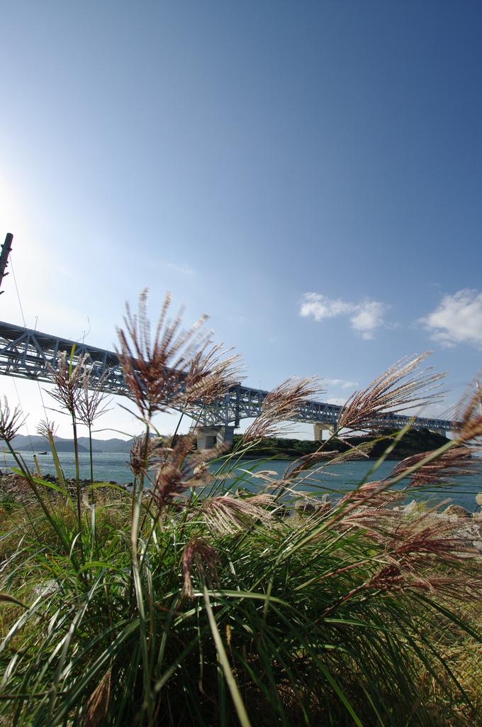瀬戸大橋とススキ