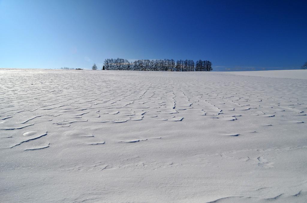 美瑛の冬Ⅱ