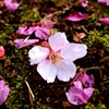Spring Drops 1