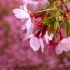 Spring Drops 3