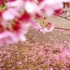Spring Drops 2