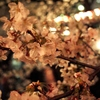 Cherry Blossoms at night 3
