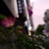 吉祥寺、夏の日暮れ 2