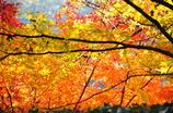 秋の安芸の宮島-2