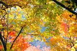 秋の安芸の宮島-4