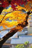 秋の安芸の宮島-6