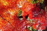 秋の安芸の宮島-3