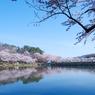 盛岡 高松の池