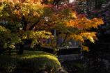 秋のハーモニー