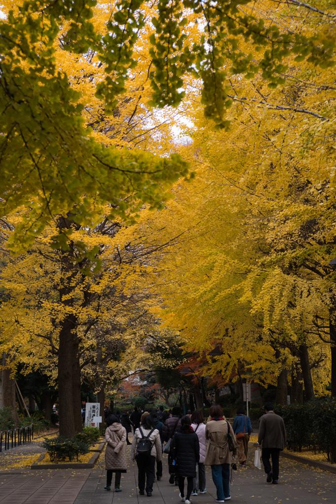 上野公園の秋