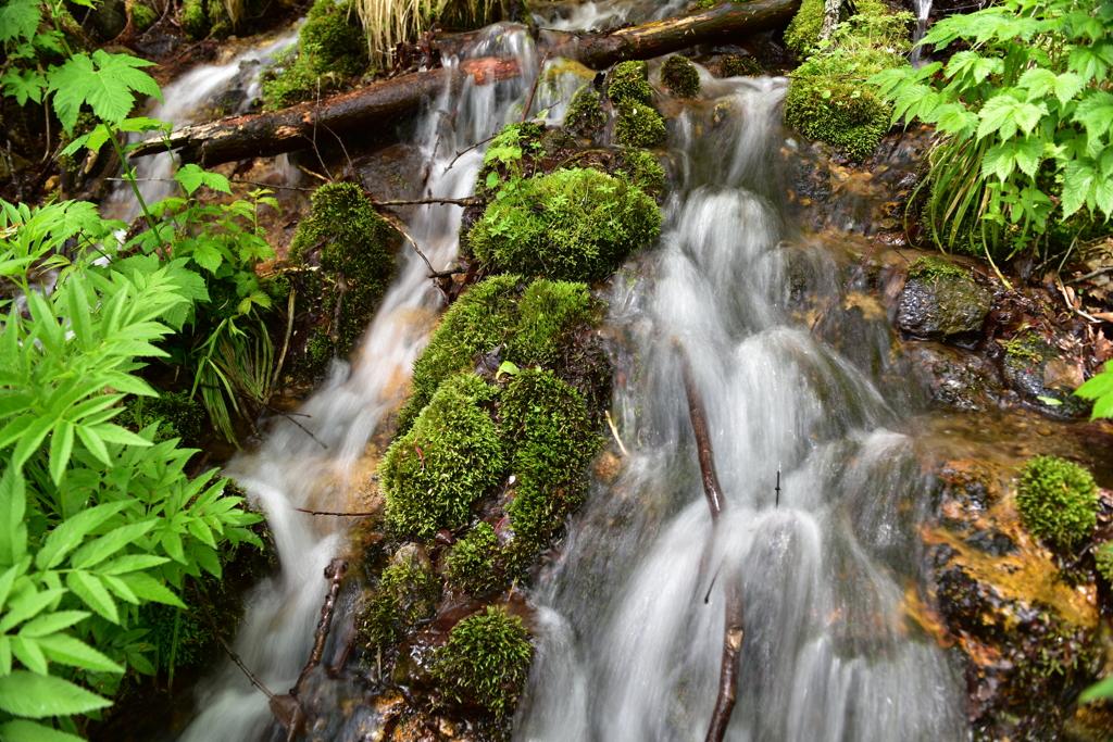 奥入瀬渓流と苔
