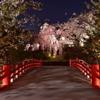 枝垂れ桜がお出迎え
