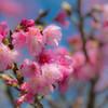 春節のころ