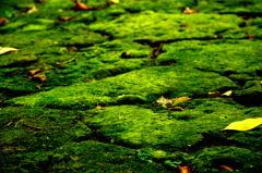 苔のある風景