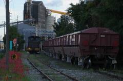 貨物列車と彼岸花 #2