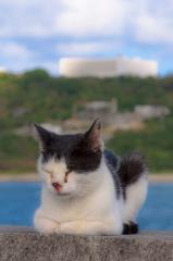 沖縄のノラ猫たち、3