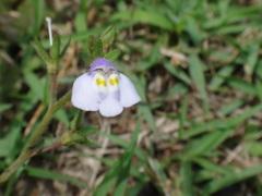 心優しいどなたか、この花の名前を教えてくださいませんか?